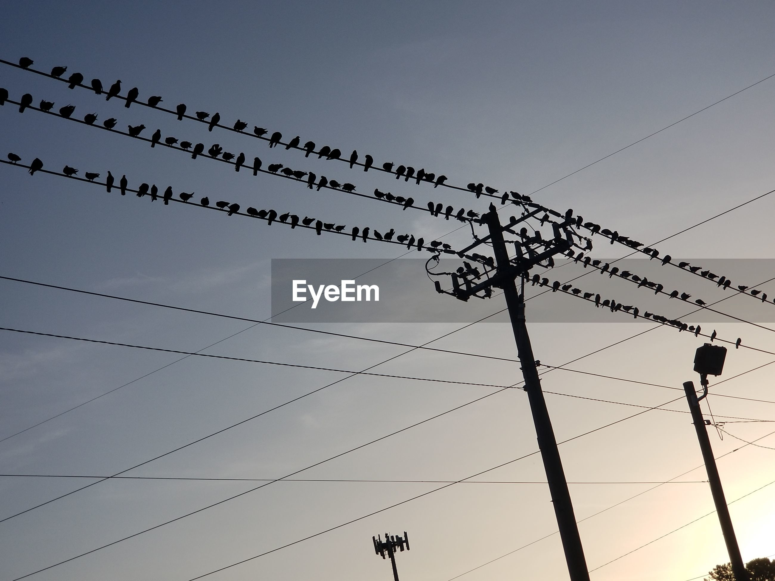 LOW ANGLE VIEW OF BIRDS ON POWER LINES