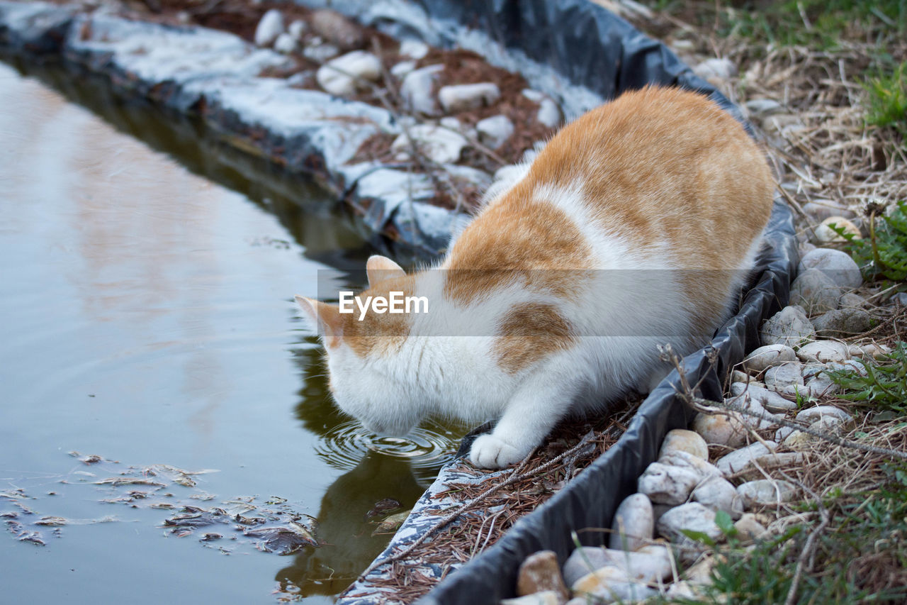 one animal, animal themes, animal, mammal, vertebrate, pets, feline, cat, domestic, domestic animals, domestic cat, no people, day, nature, relaxation, water, high angle view, solid, outdoors, whisker