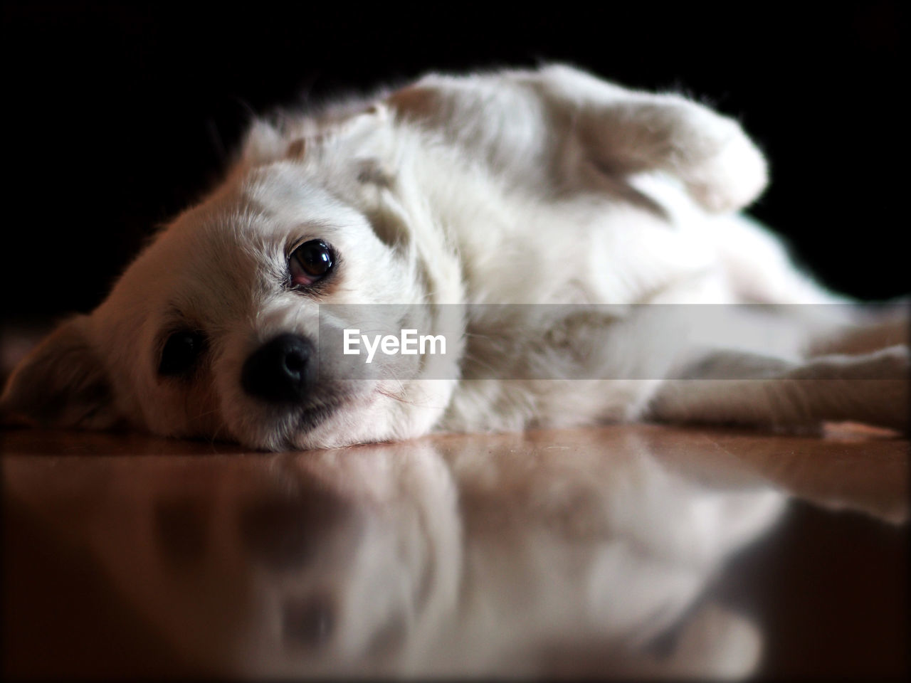 Dog Looking Away While Resting On Floor