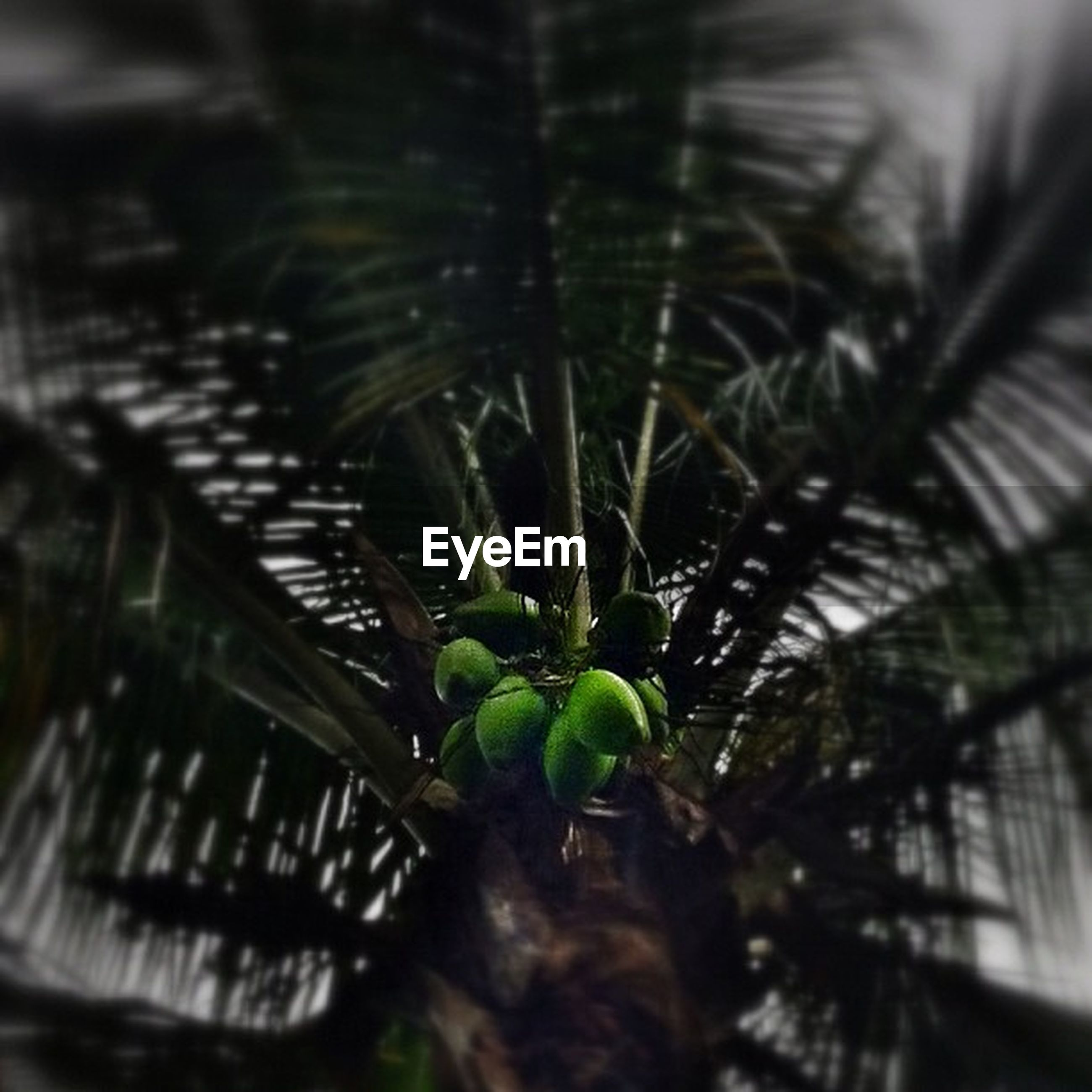 growth, tree, plant, selective focus, focus on foreground, leaf, nature, close-up, green color, outdoors, no people, day, branch, low angle view, built structure, growing, palm tree, tranquility, sunlight, architecture