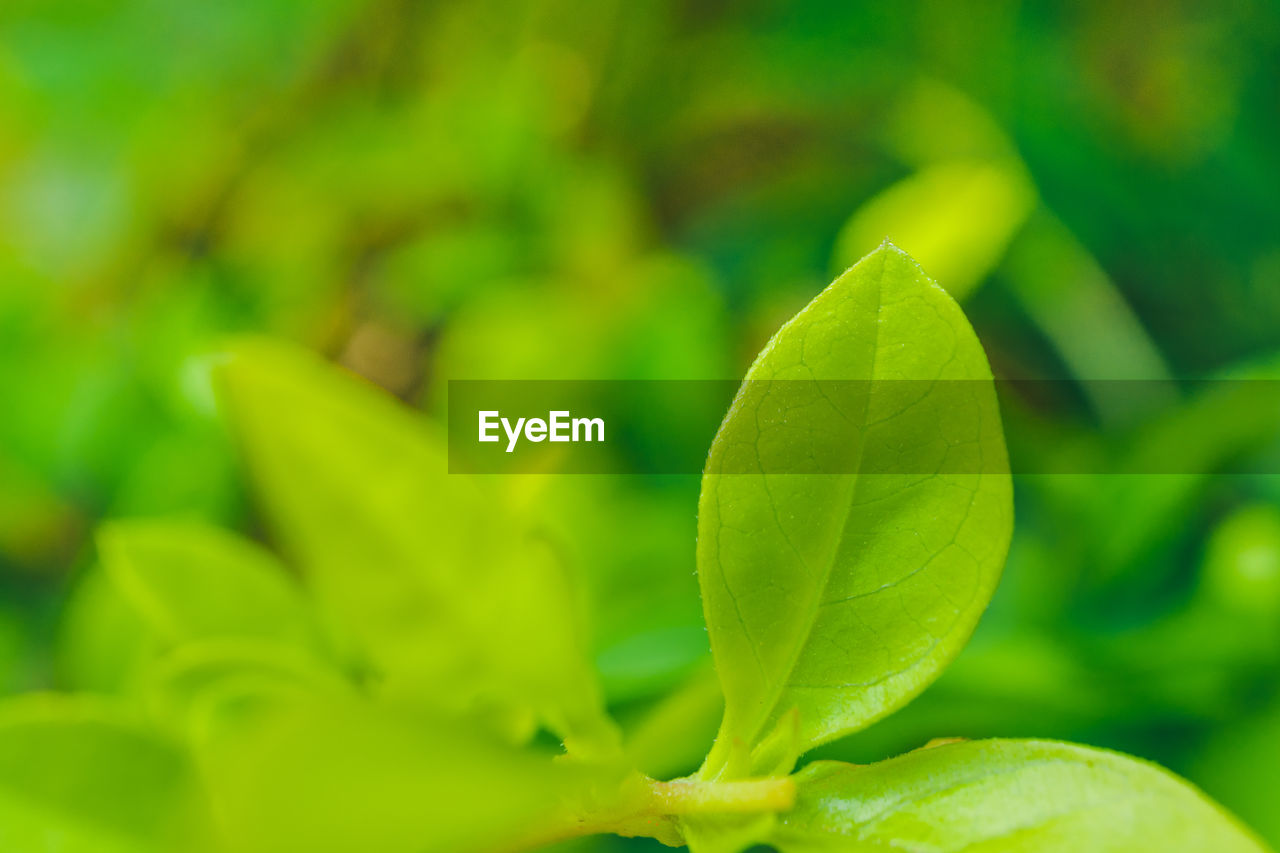 green color, leaf, growth, close-up, freshness, no people, nature, plant, beauty in nature, day, outdoors, fragility, food