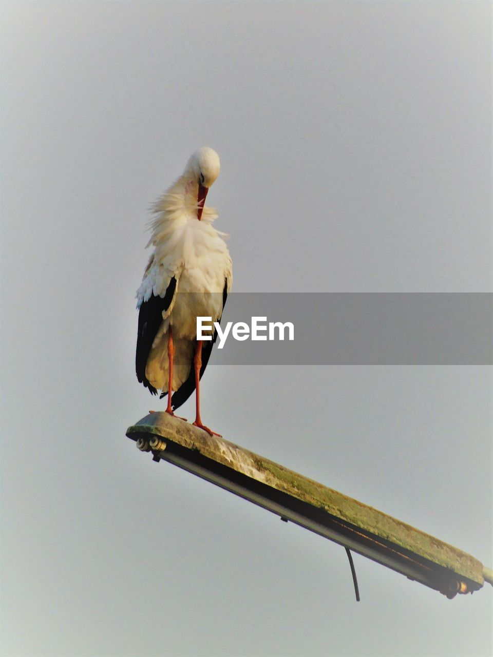 vertebrate, bird, animal themes, animal, animal wildlife, animals in the wild, sky, perching, one animal, nature, clear sky, no people, copy space, low angle view, day, outdoors, beauty in nature, full length, yellow, stork