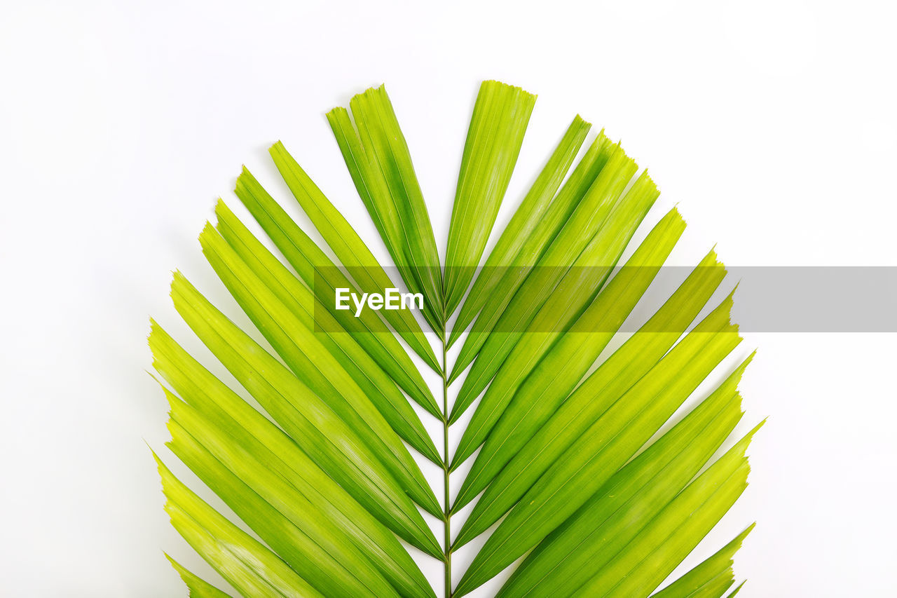 Close-up of palm leaves on white background