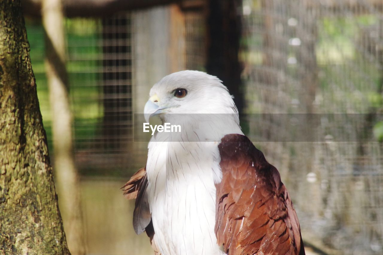 animal themes, animal, vertebrate, bird, one animal, animal wildlife, animals in the wild, focus on foreground, bird of prey, day, no people, close-up, nature, animals in captivity, tree, white color, outdoors, cage, plant, beak, eagle, animal head
