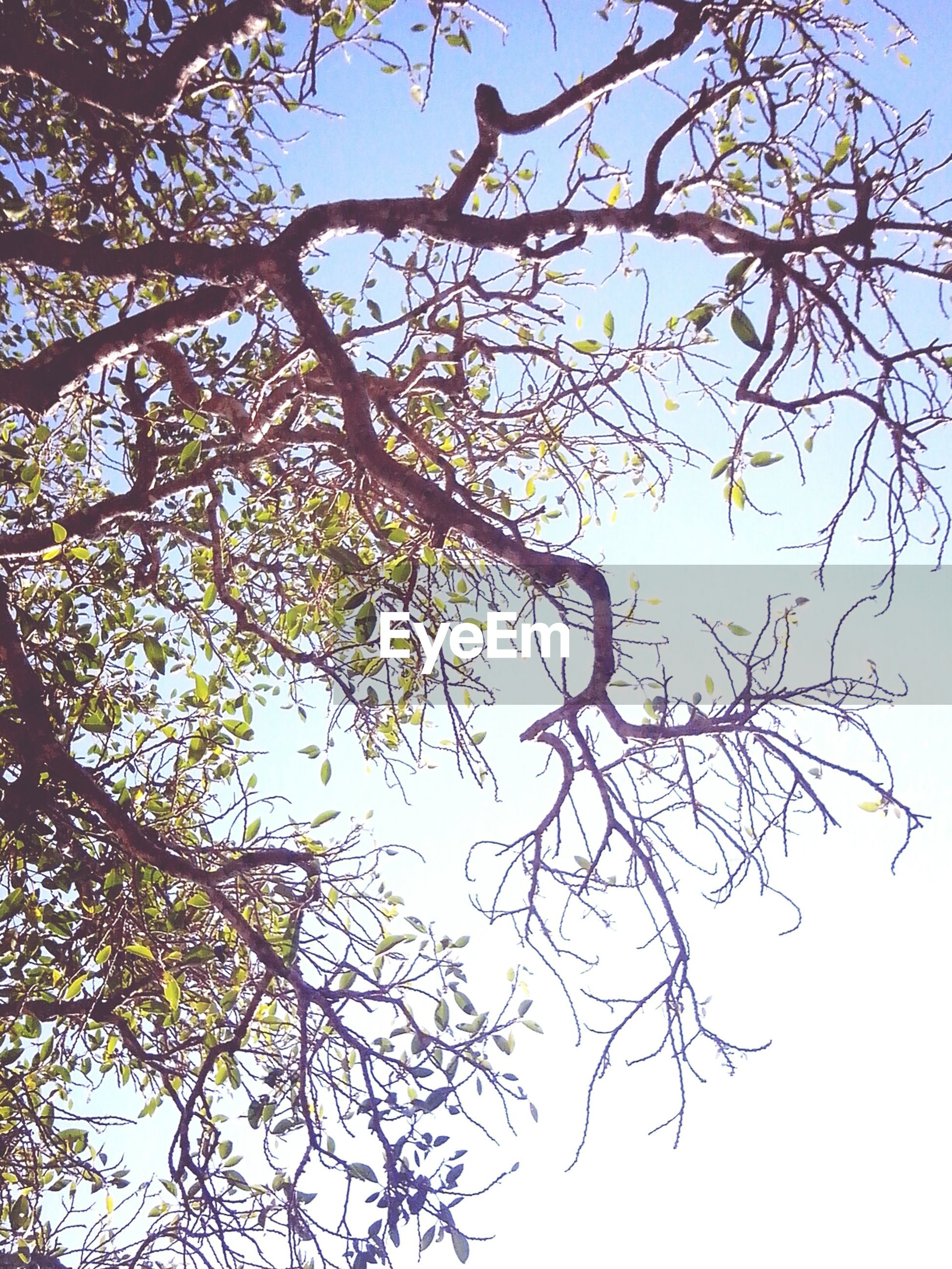 tree, low angle view, branch, clear sky, nature, growth, beauty in nature, sky, blue, tranquility, bare tree, day, outdoors, no people, scenics, sunlight, high section, twig, tranquil scene, leaf