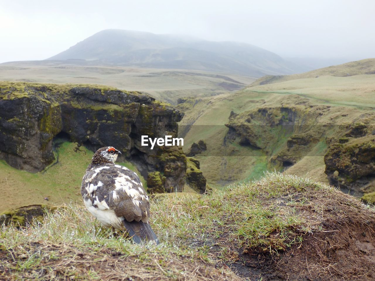 Bird On Cliff Against Mountain