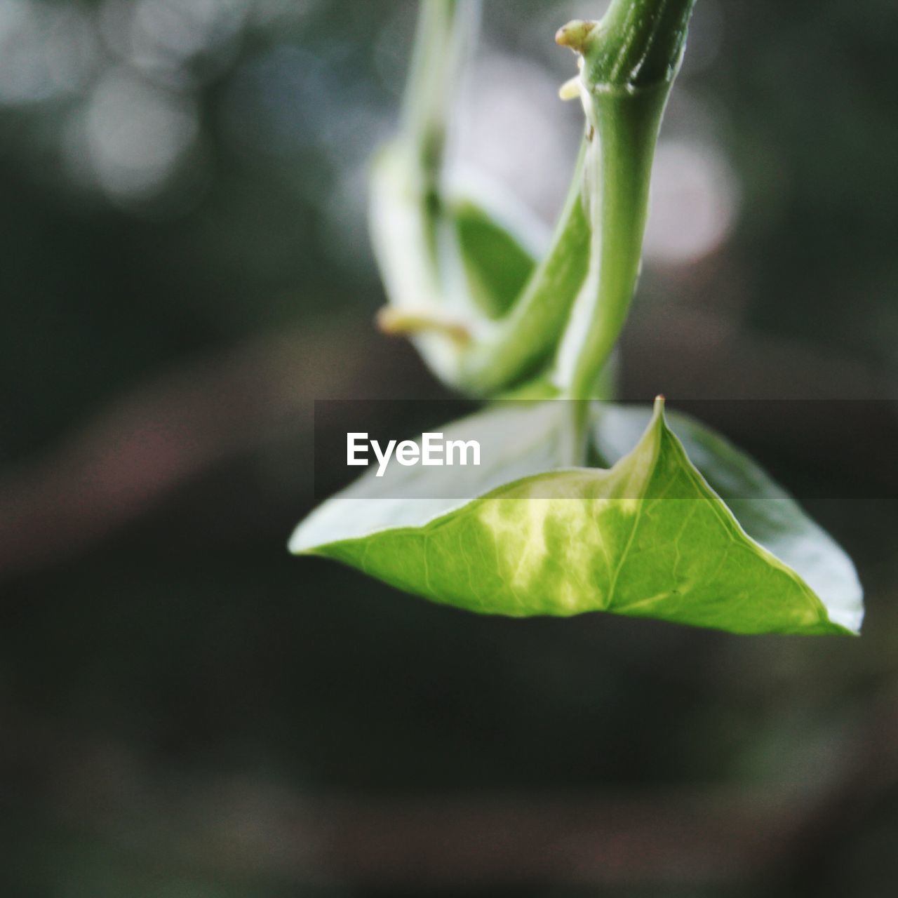 plant part, leaf, growth, plant, green color, close-up, beauty in nature, nature, no people, selective focus, freshness, day, outdoors, focus on foreground, vulnerability, fragility, beginnings, food, new life, food and drink, leaves