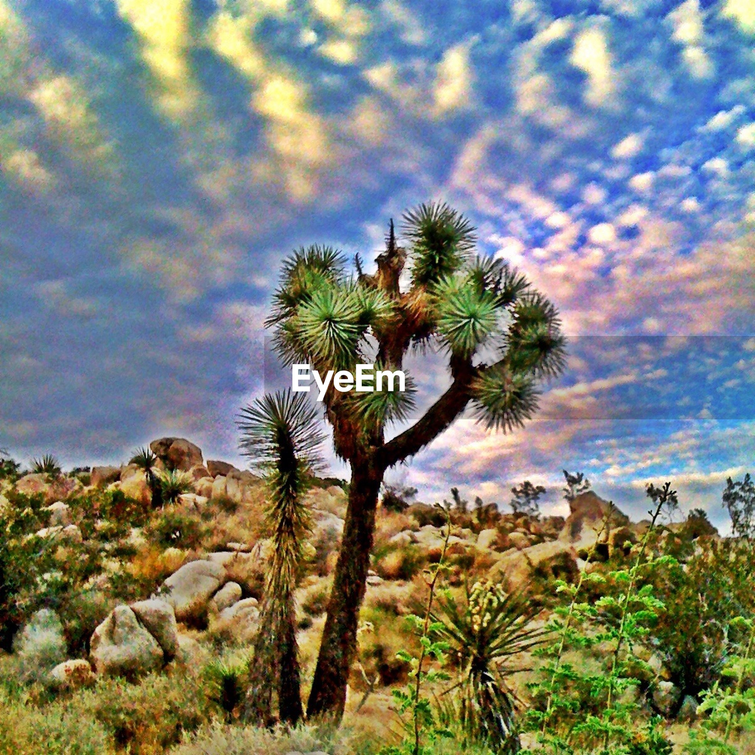 sky, tree, palm tree, cloud - sky, tranquility, tranquil scene, scenics, nature, beauty in nature, cloud, growth, cloudy, rock - object, landscape, green color, rock formation, plant, idyllic, non-urban scene, outdoors