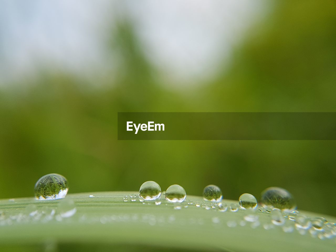 drop, beauty in nature, water, nature, fragility, growth, green color, purity, freshness, selective focus, wet, no people, leaf, day, outdoors, close-up, plant, grass