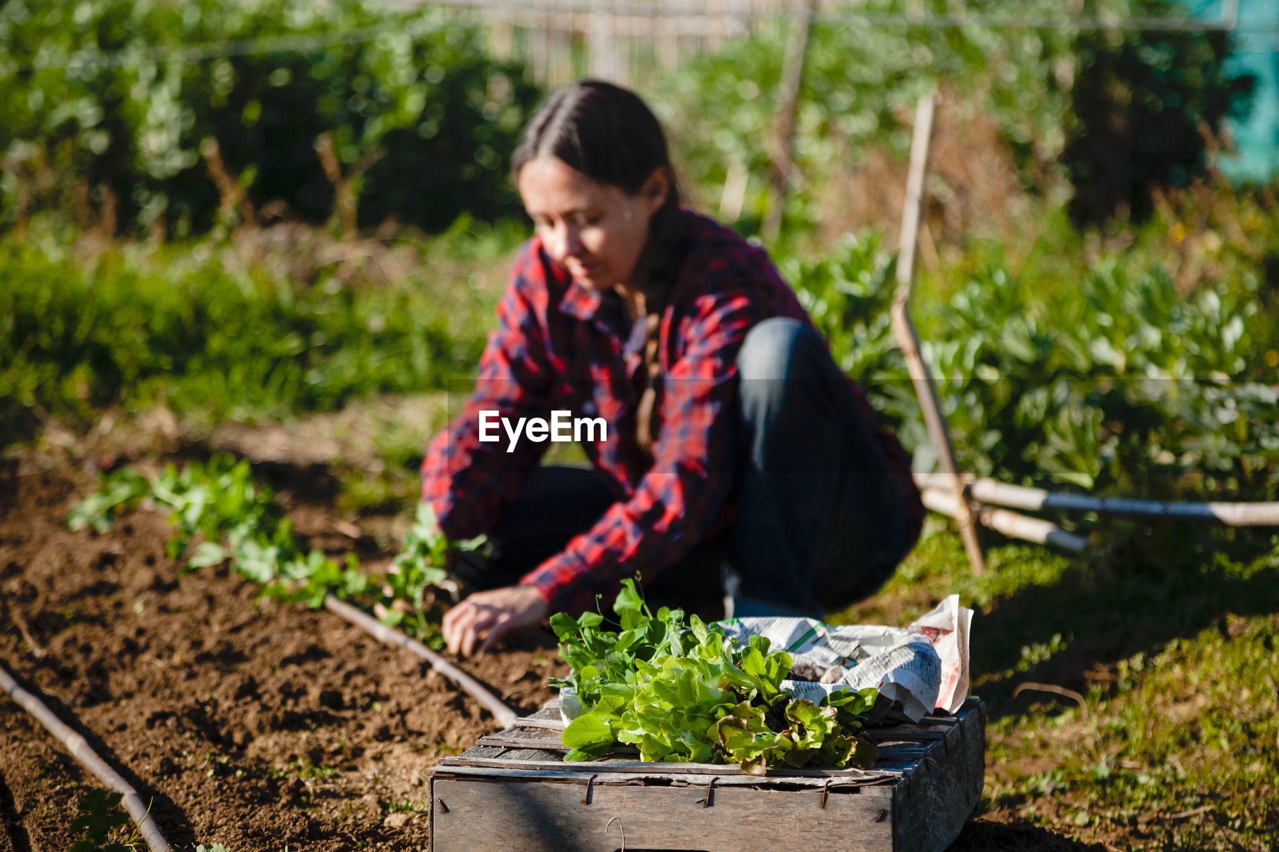 Woman with vegetables in farm