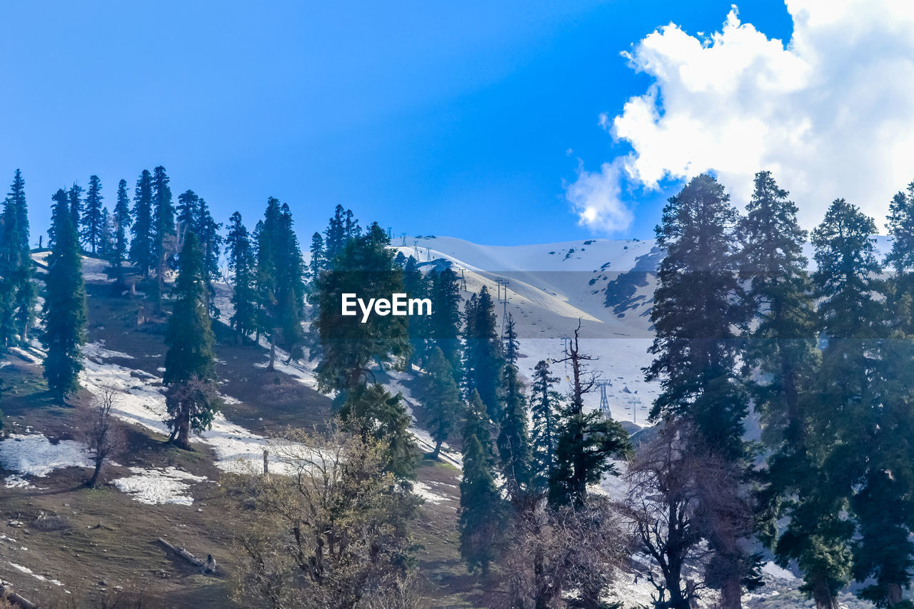 sky, mountain, tree, plant, beauty in nature, tranquility, tranquil scene, scenics - nature, cloud - sky, day, nature, no people, environment, non-urban scene, growth, winter, cold temperature, landscape, snow, outdoors, snowcapped mountain, coniferous tree, mountain peak