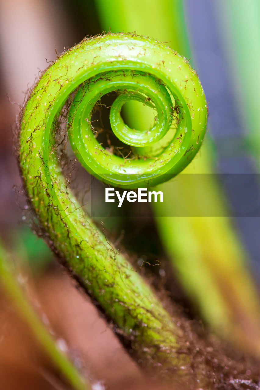 green color, close-up, spiral, selective focus, tendril, plant, no people, growth, nature, beauty in nature, curled up, day, focus on foreground, freshness, fragility, vulnerability, fern, outdoors, extreme close-up, wet