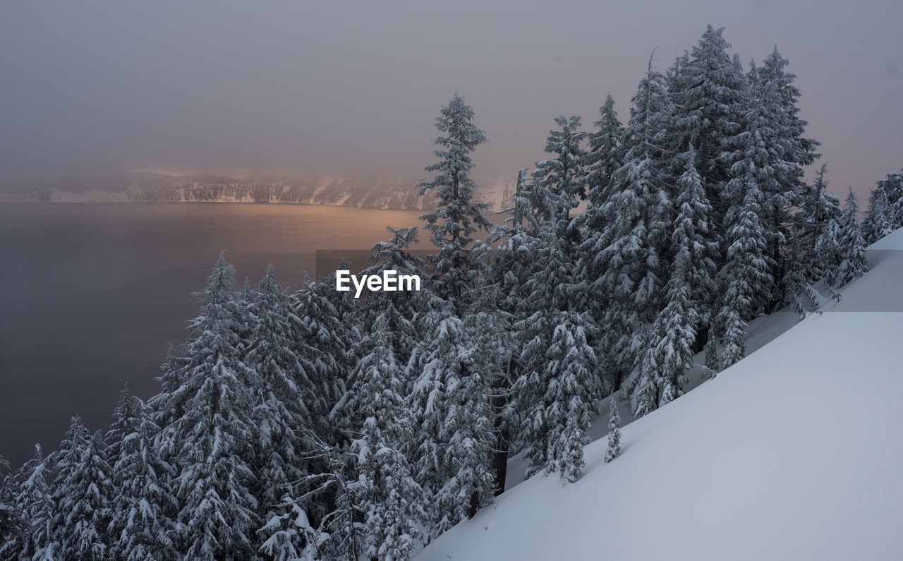 Snow Covered Trees On Mountain By Lake