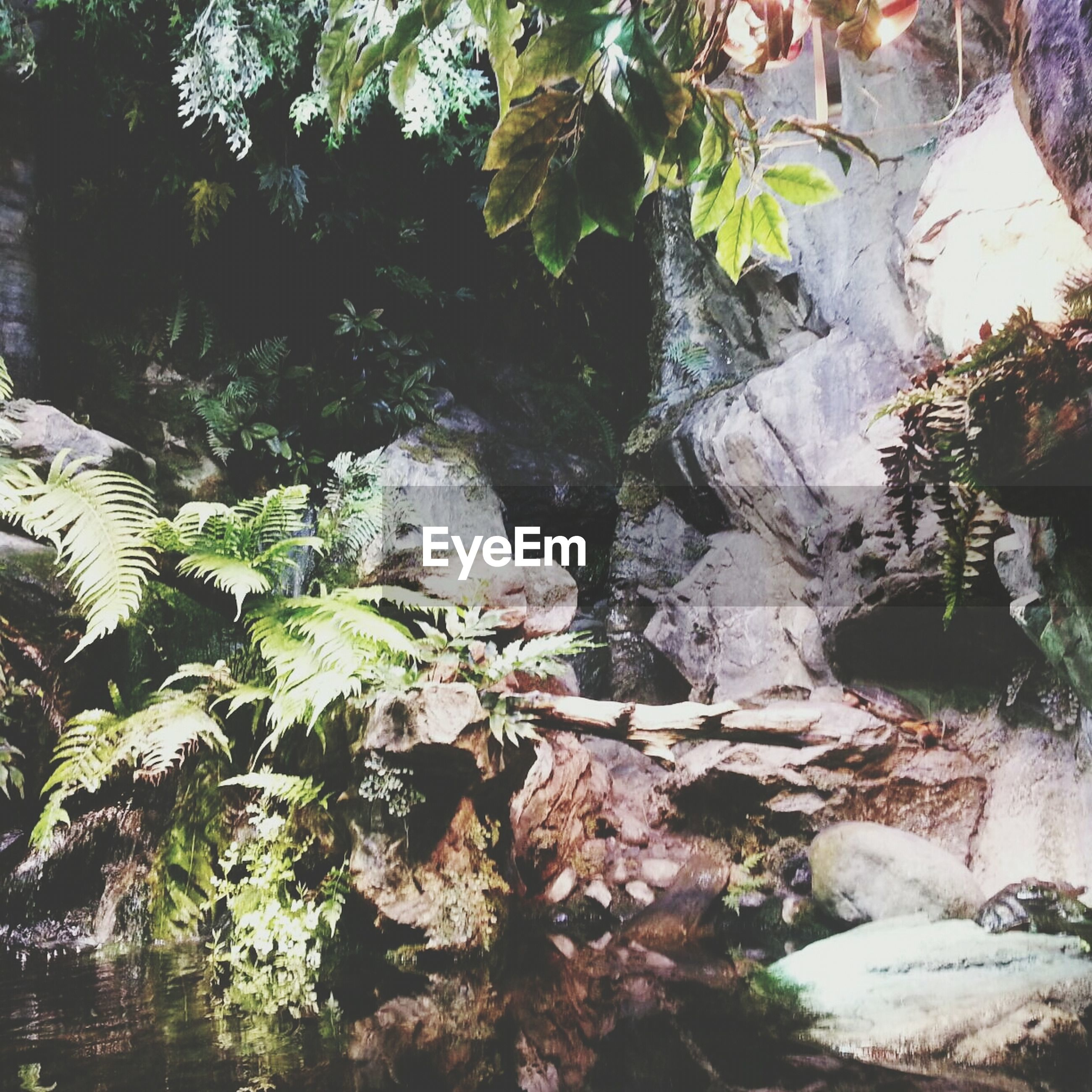 tree, water, nature, branch, growth, leaf, rock - object, plant, beauty in nature, tranquility, forest, day, outdoors, no people, moss, green color, stream, scenics, close-up, rock