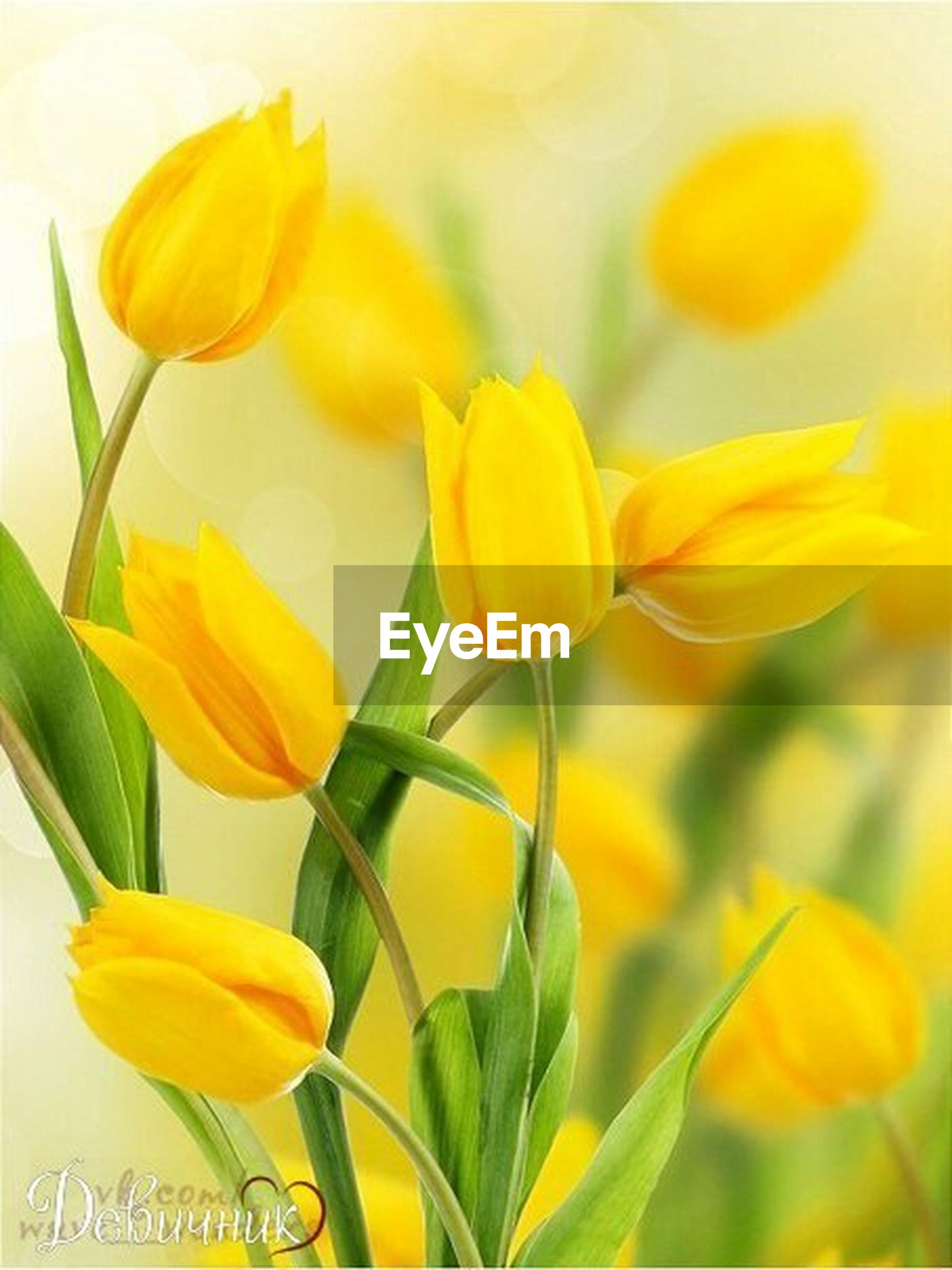 flower, yellow, petal, freshness, fragility, growth, flower head, beauty in nature, plant, close-up, nature, stem, focus on foreground, blooming, in bloom, no people, orange color, bud, leaf, selective focus
