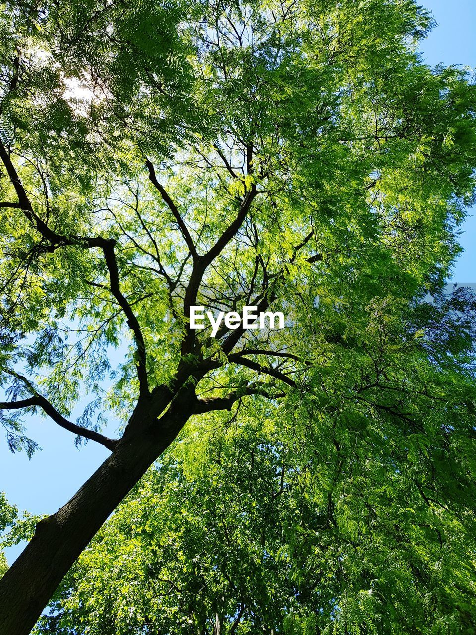 tree, plant, beauty in nature, growth, low angle view, branch, green color, nature, day, no people, tranquility, sky, outdoors, scenics - nature, tree trunk, trunk, sunlight, land, forest, tree canopy, directly below