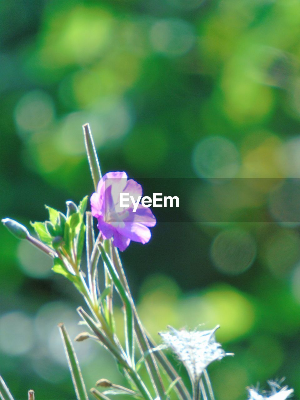 flower, nature, fragility, plant, growth, beauty in nature, petal, no people, close-up, outdoors, focus on foreground, flower head, day, freshness, blooming