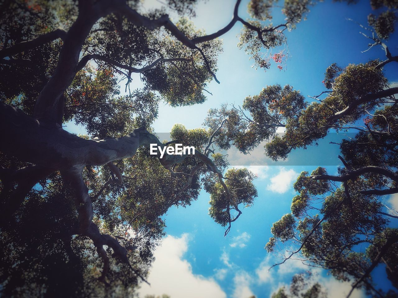 low angle view, nature, tree, beauty in nature, tranquility, day, sky, forest, no people, scenics, outdoors, blue sky, branch