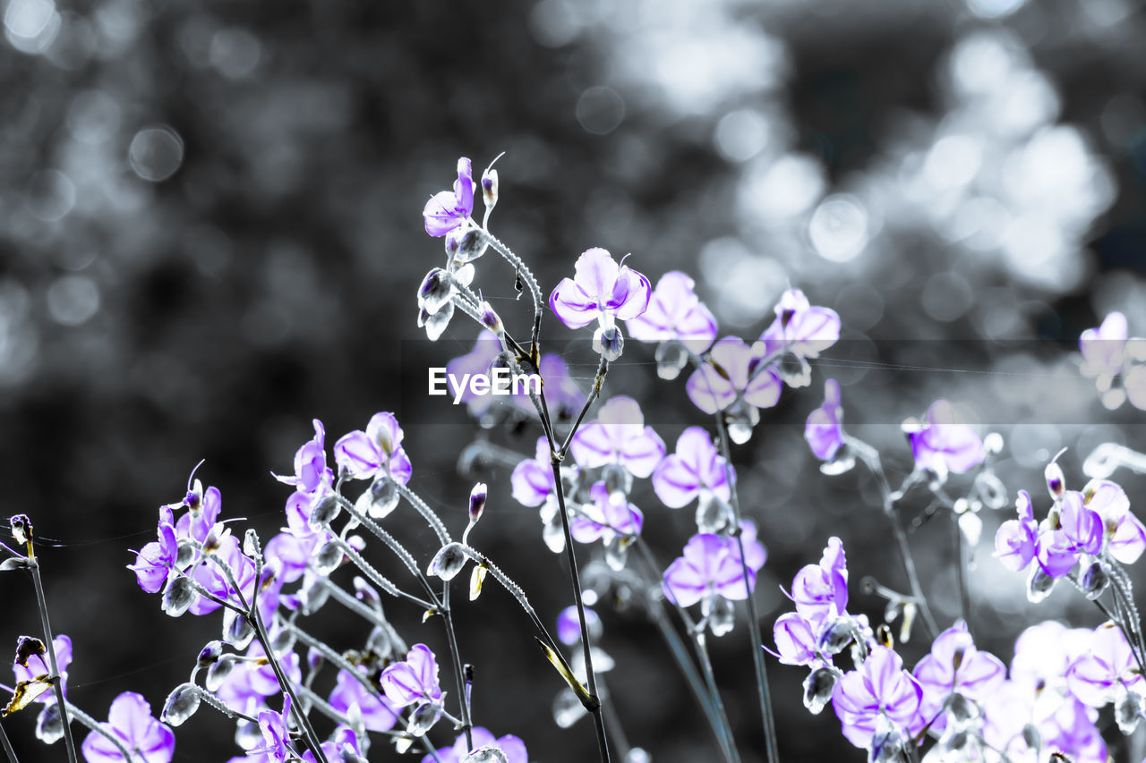 flower, flowering plant, plant, vulnerability, fragility, growth, purple, freshness, focus on foreground, beauty in nature, close-up, nature, no people, petal, day, flower head, selective focus, outdoors, inflorescence, animal wildlife, pollination