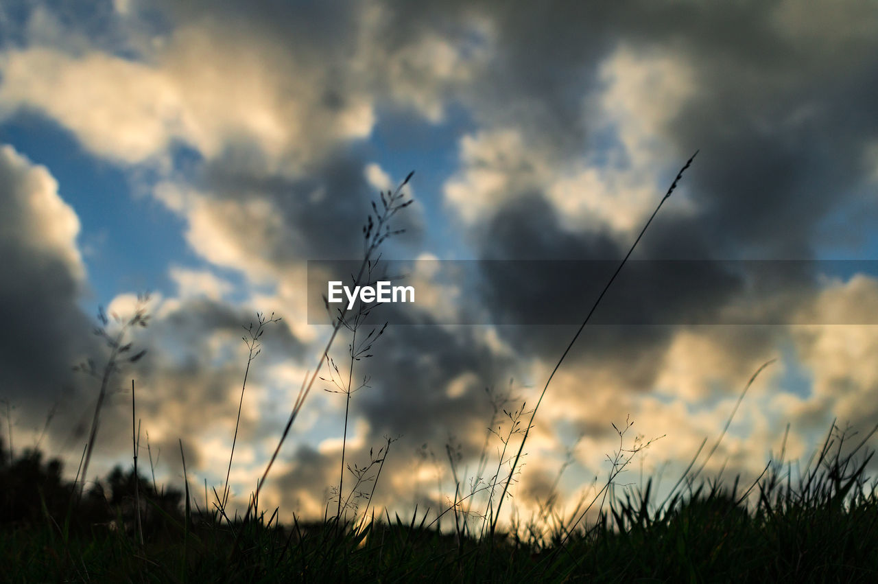 nature, sky, grass, field, cloud - sky, no people, tranquility, outdoors, growth, tranquil scene, beauty in nature, plant, day, sunset, close-up