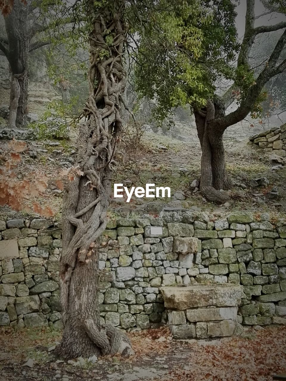 tree, tree trunk, nature, growth, no people, rock - object, beauty in nature, day, tranquility, outdoors, branch, scenics