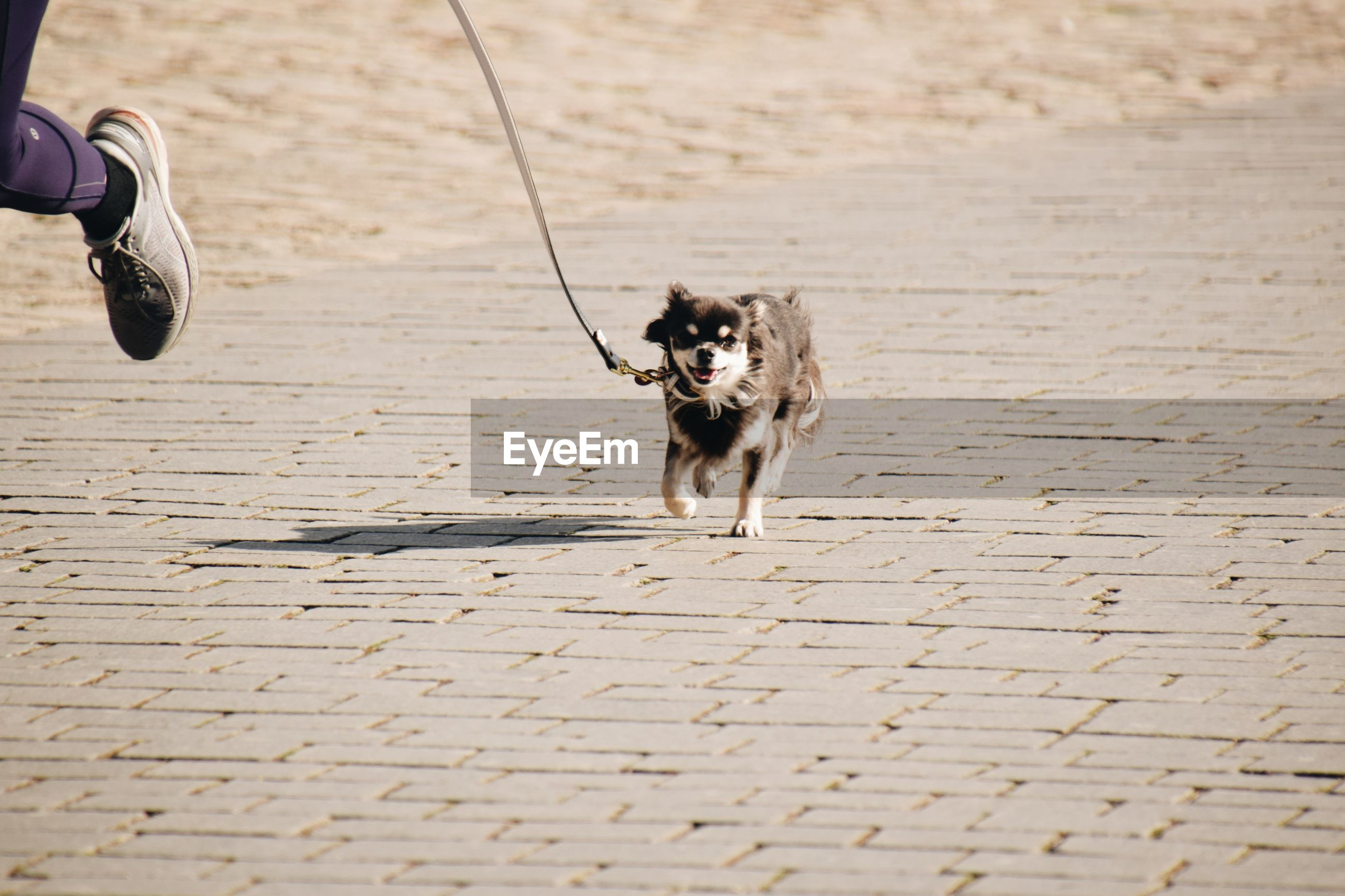 HIGH ANGLE VIEW OF DOG RUNNING ON FOOTPATH BY BRICK WALL