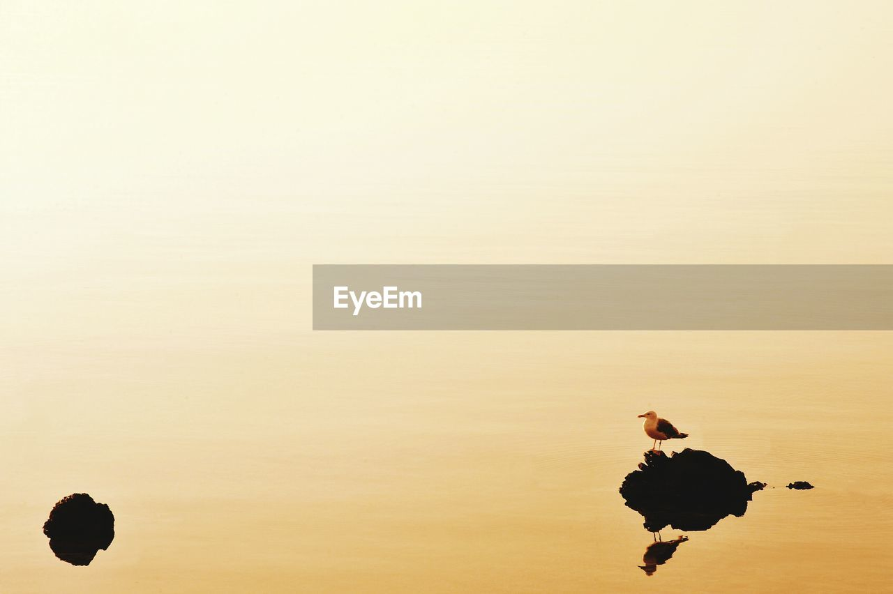 bird, animal themes, animals in the wild, nature, reflection, sunset, animal wildlife, silhouette, no people, outdoors, lake, beauty in nature, water, day, sky