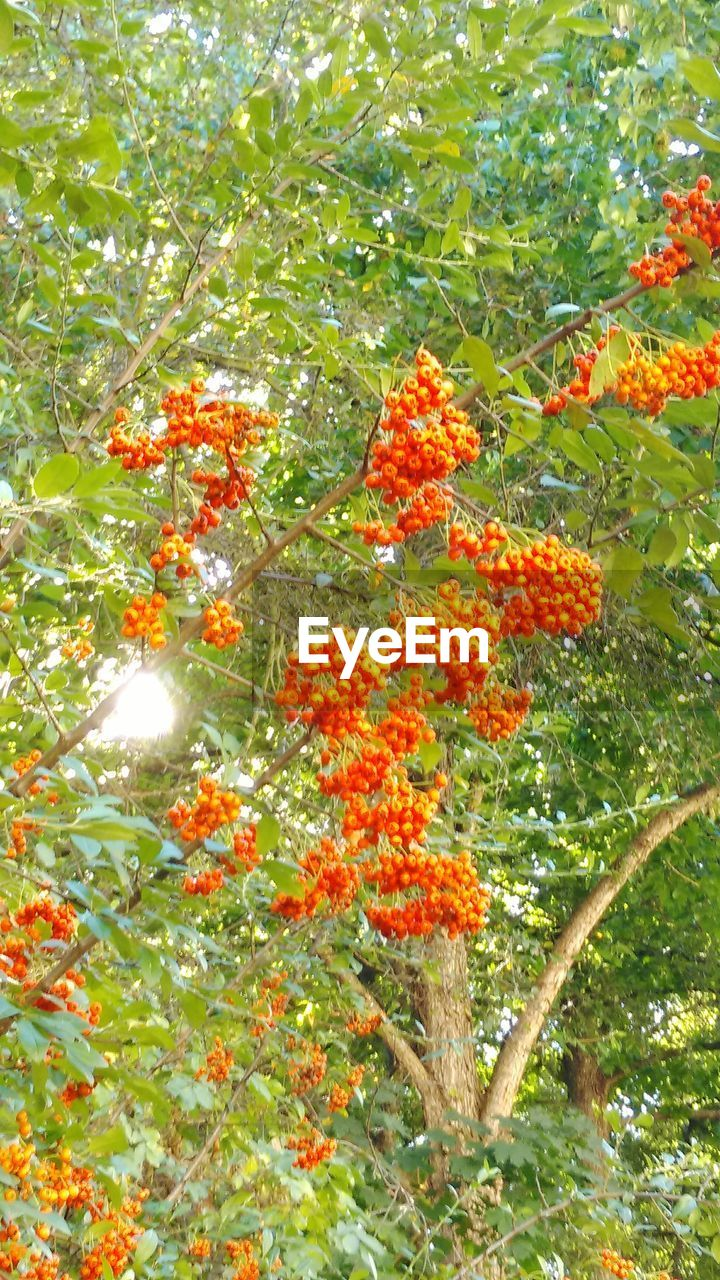growth, nature, orange color, beauty in nature, no people, freshness, outdoors, tree, flower, plant, day, green color, leaf, fragility, close-up