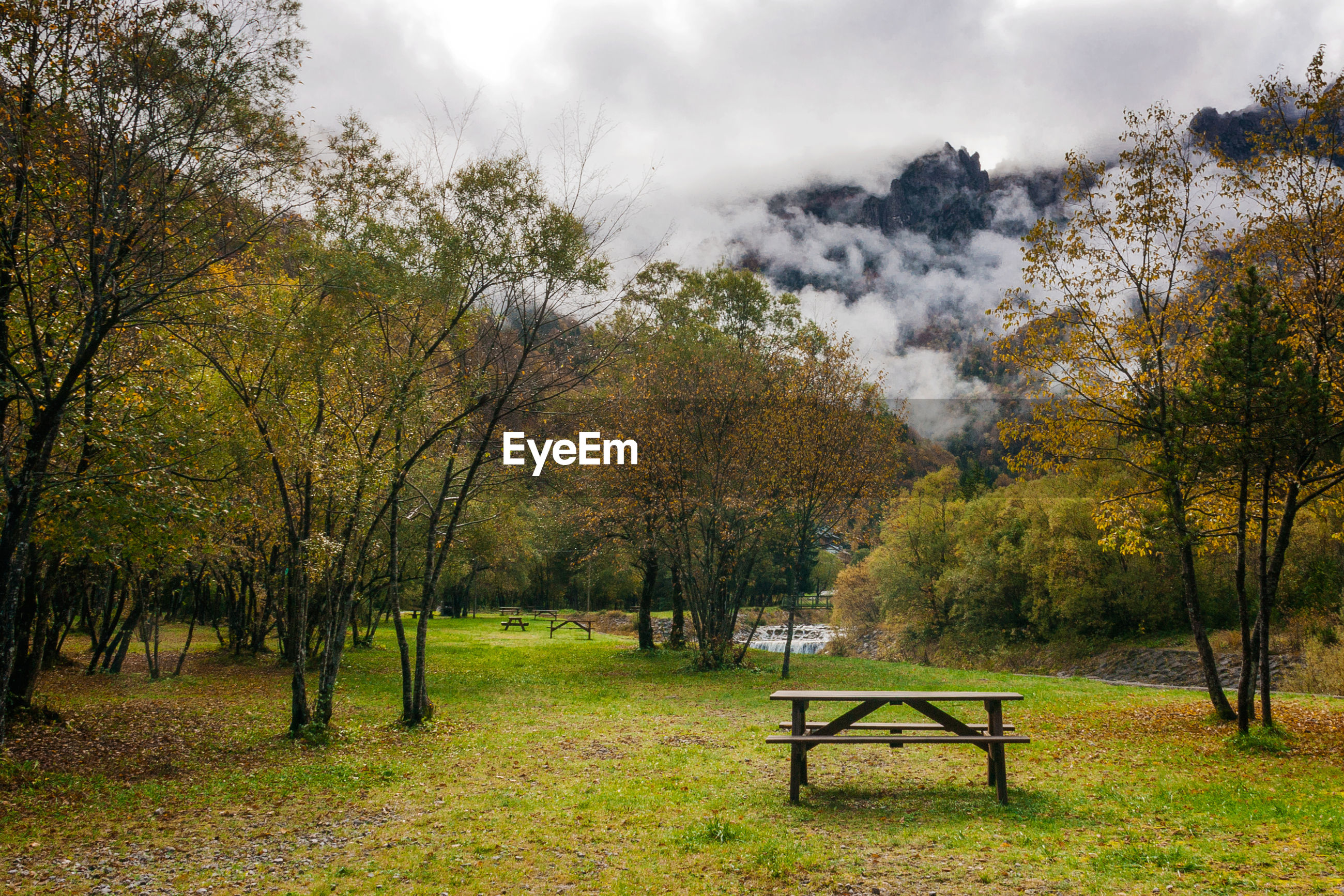 PARK BENCH BY TREES DURING AUTUMN