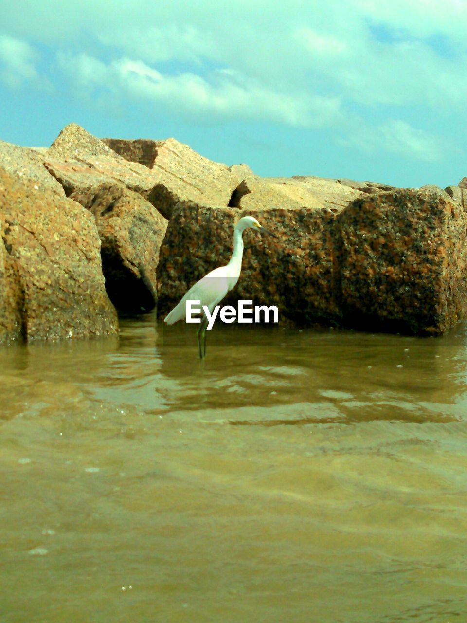 one animal, animals in the wild, animal themes, bird, water, waterfront, rock - object, day, animal wildlife, nature, outdoors, no people, sky, lake, beauty in nature, great egret, perching