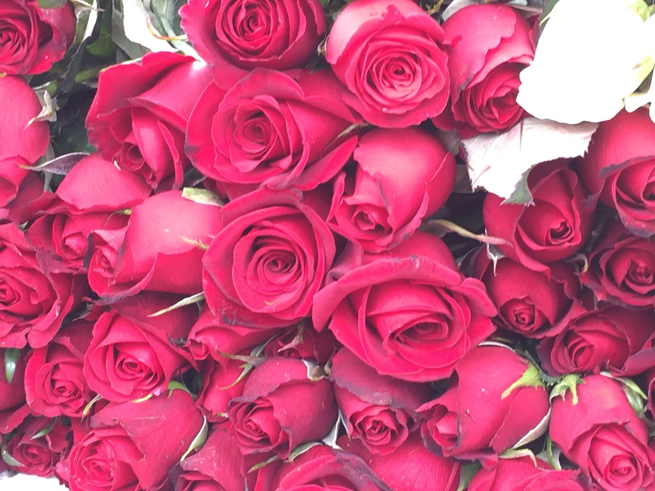 flower, rose - flower, petal, bouquet, flower head, fragility, beauty in nature, full frame, backgrounds, freshness, nature, red, no people, flower market, close-up, flower shop, rose petals, beauty, gift, day, indoors, florist