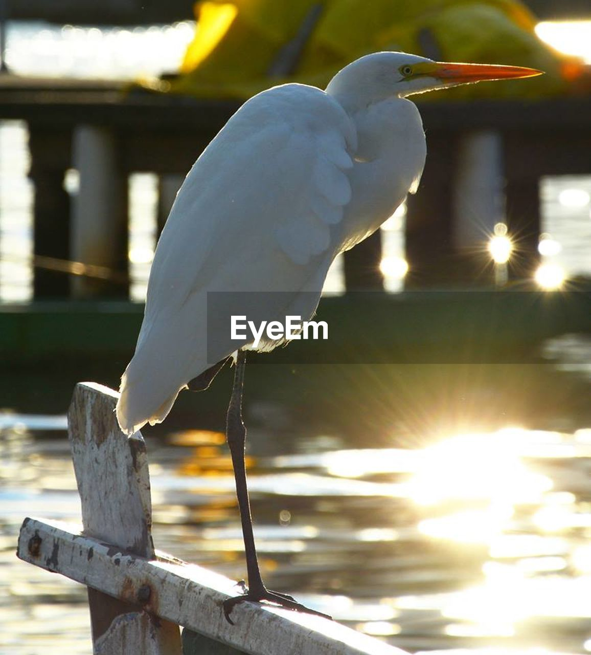 bird, vertebrate, animal themes, animals in the wild, animal, one animal, perching, focus on foreground, animal wildlife, sunlight, no people, nature, white color, day, water, close-up, egret, outdoors, lake