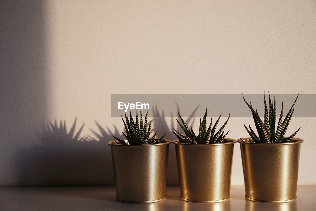 Close-Up Of Potted Plants On Table At Home