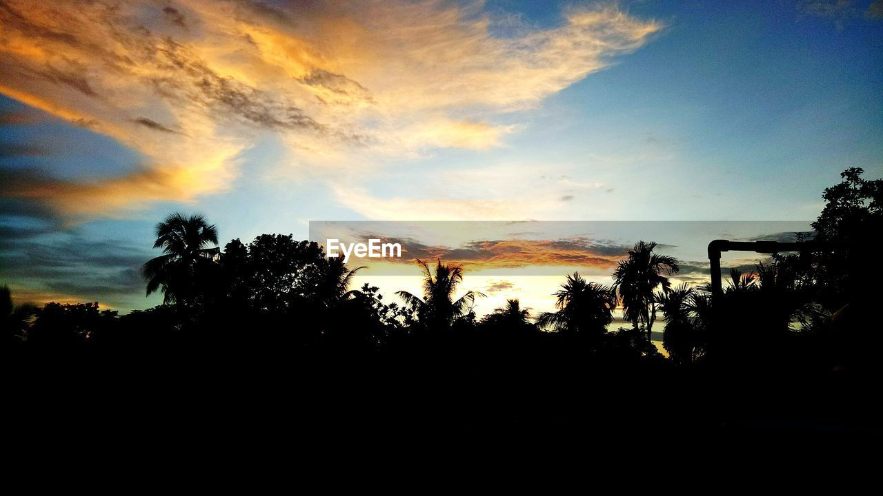 silhouette, sky, sunset, tree, beauty in nature, plant, cloud - sky, scenics - nature, tranquility, tranquil scene, nature, orange color, no people, outdoors, growth, idyllic, copy space, non-urban scene, dark, land