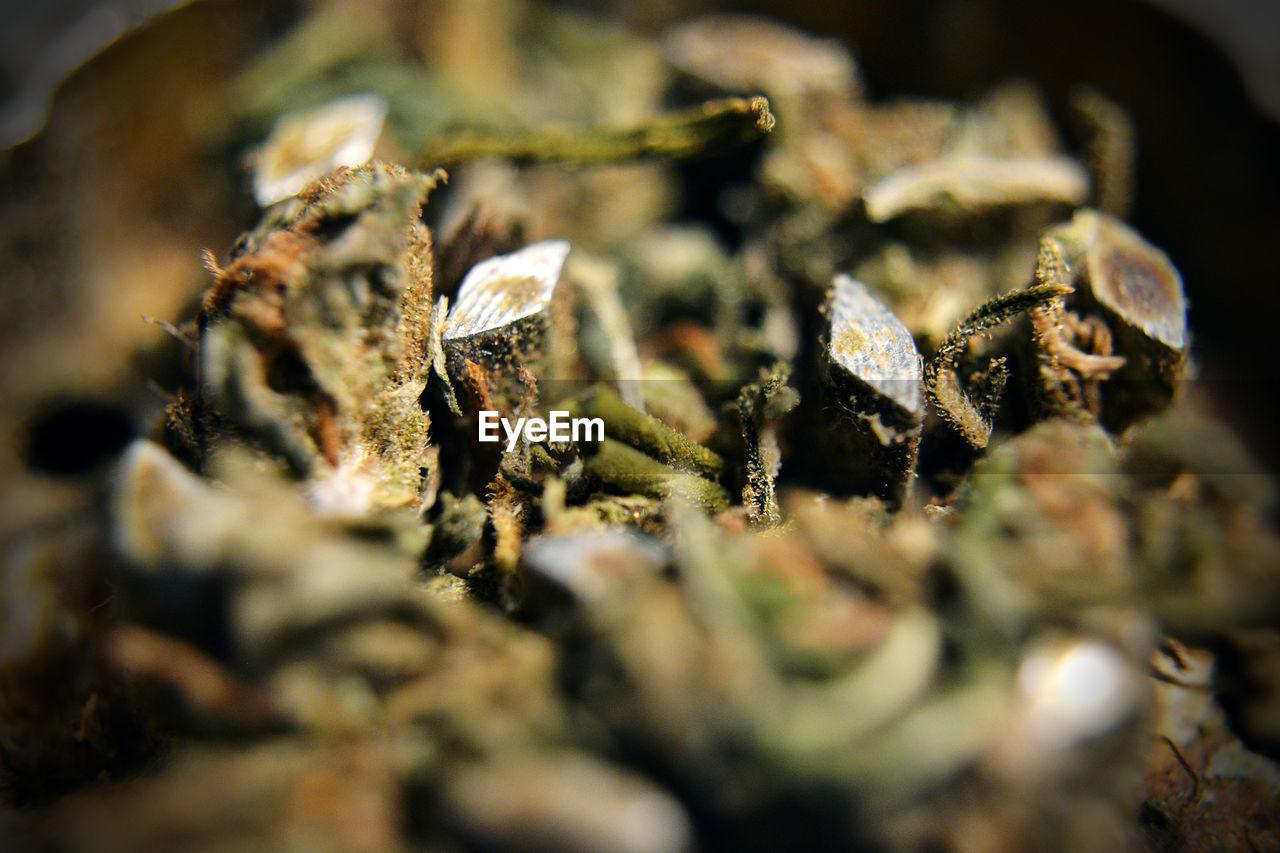 Close-Up Of Cannabis