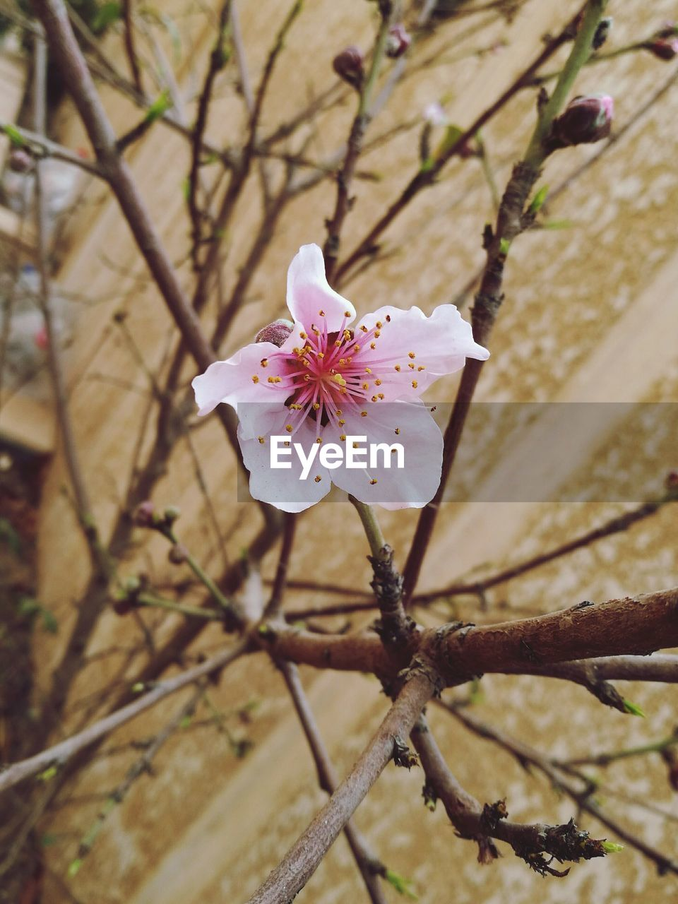 Close-Up Of Flower Growing On Tree