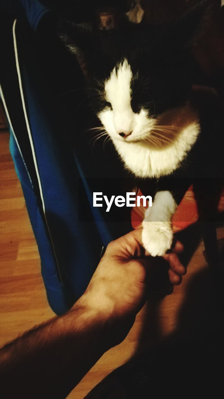 domestic, pets, domestic animals, mammal, one animal, cat, feline, vertebrate, domestic cat, indoors, people, high angle view, home interior, men, real people, human hand, lifestyles, pet owner