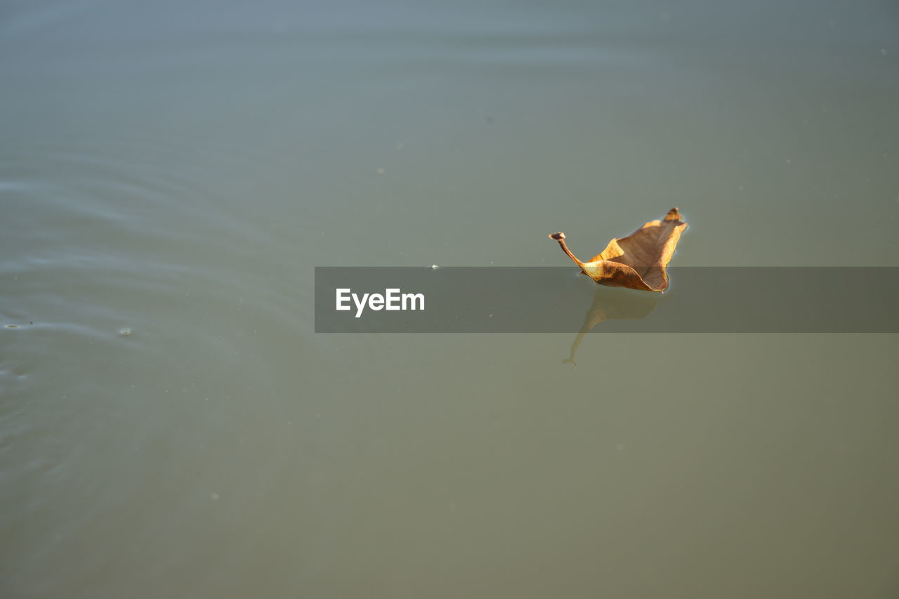 High angle view of dry leaf floating on water