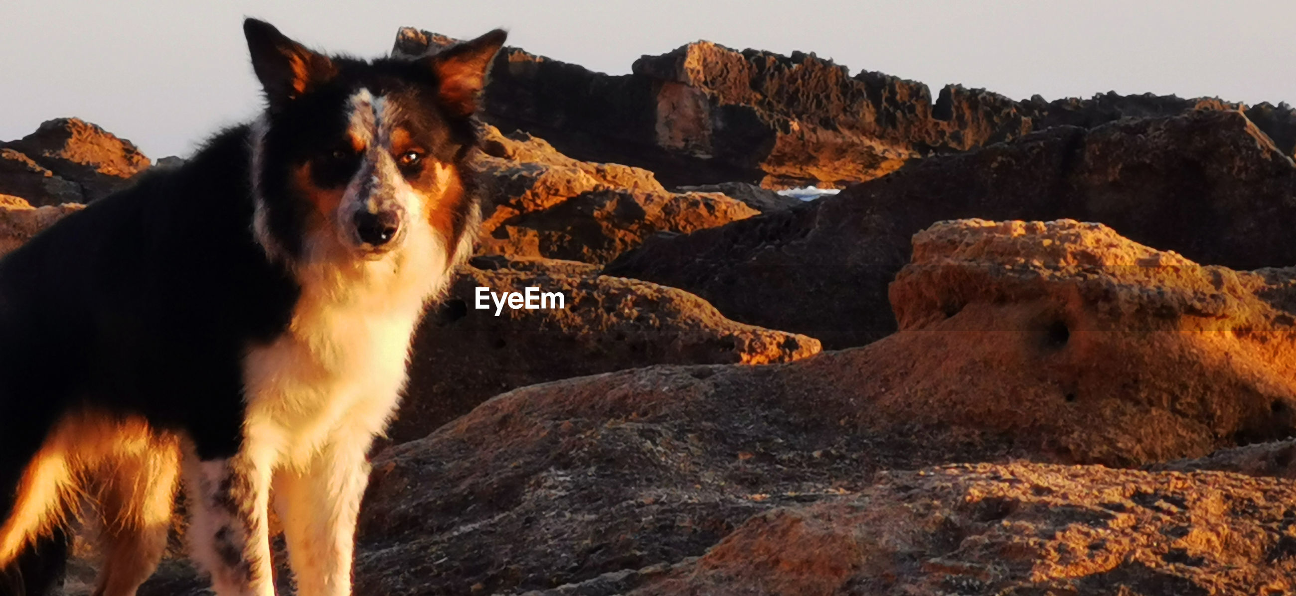 VIEW OF A DOG LOOKING AT MOUNTAIN