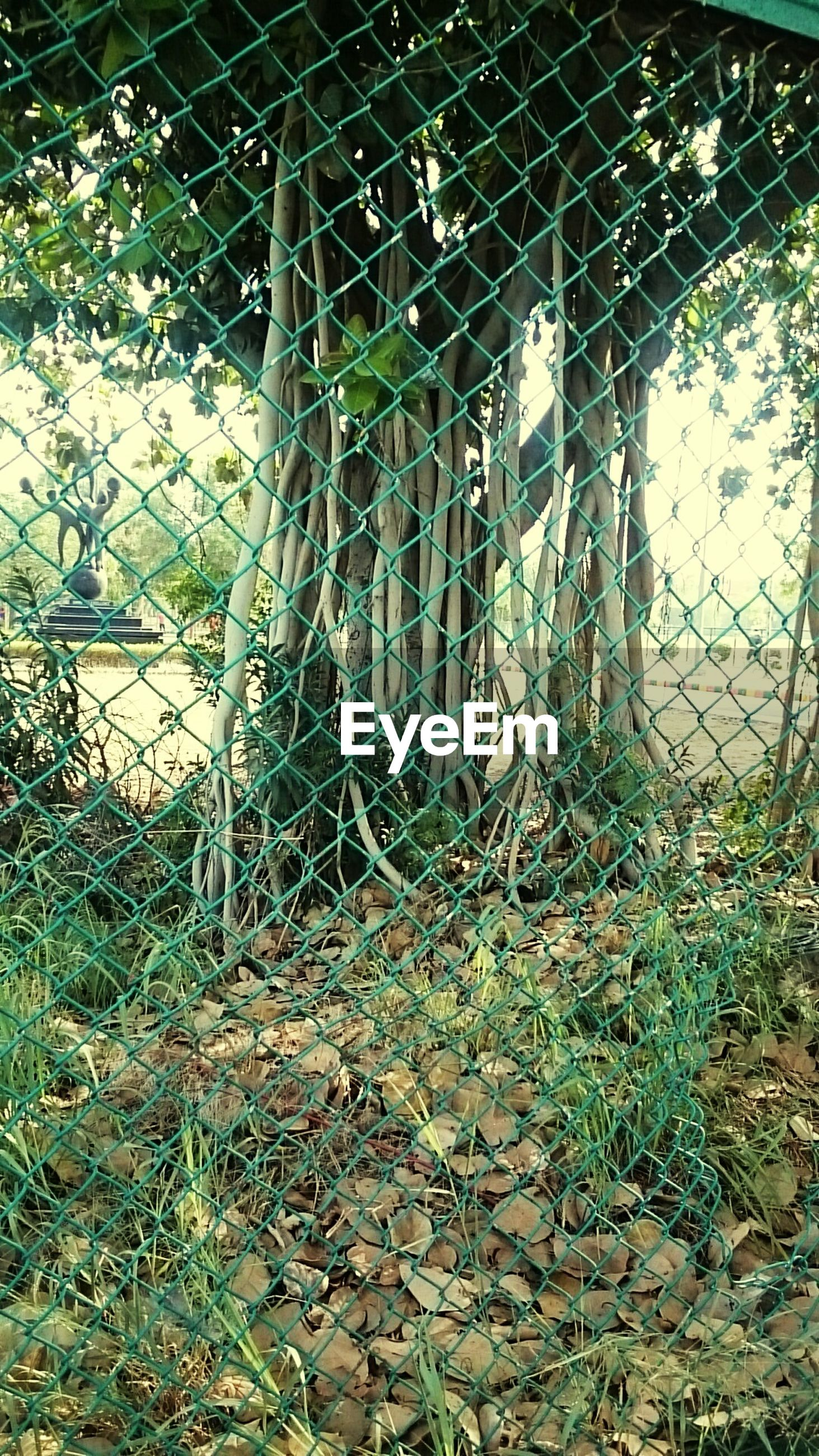 chainlink fence, metal, fence, tree, protection, plant, grass, abandoned, water, safety, day, security, nature, outdoors, no people, broken, sunlight, built structure, tranquility, growth