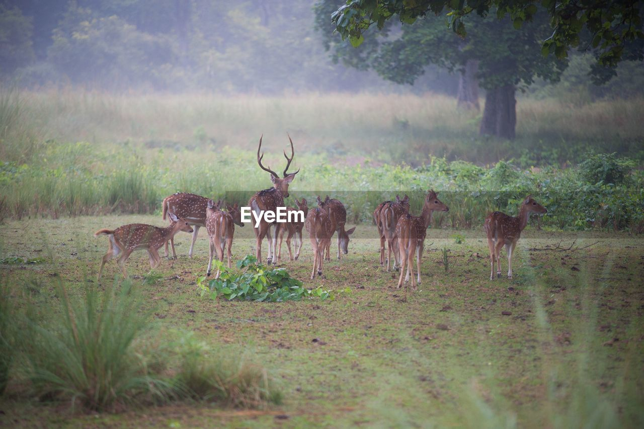 Deer On Field Against Trees In Forest