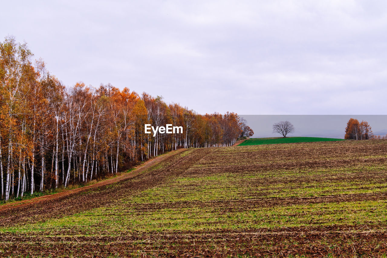 Trees Growing On Field Against Sky During Autumn