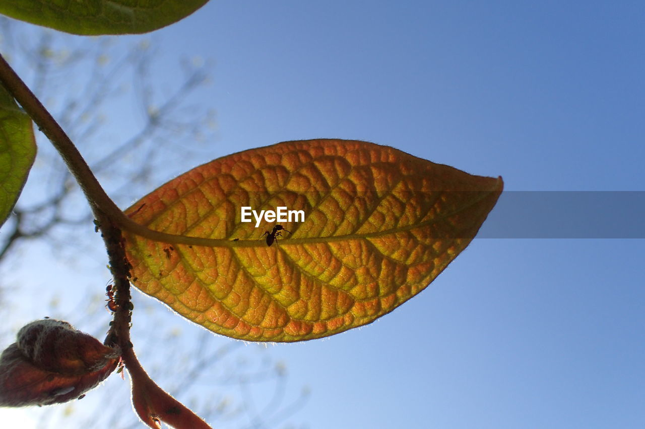 sky, nature, beauty in nature, low angle view, plant, leaf, plant part, close-up, day, no people, growth, focus on foreground, outdoors, clear sky, fragility, vulnerability, blue, animal wing, tree, tranquility, butterfly - insect
