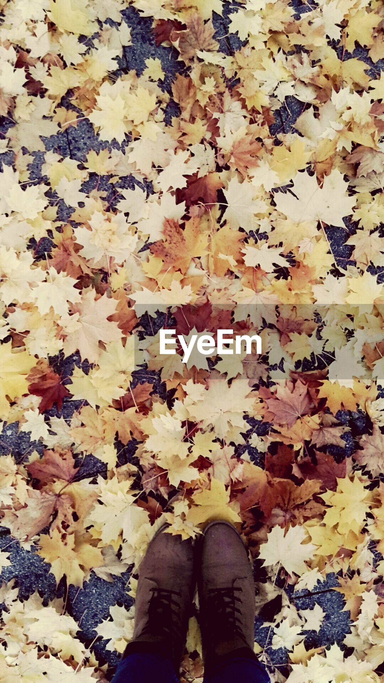 leaf, autumn, change, low section, leaves, nature, human leg, one person, abundance, real people, day, beauty in nature, yellow, standing, outdoors, maple leaf, fragility, flower, maple, close-up, people