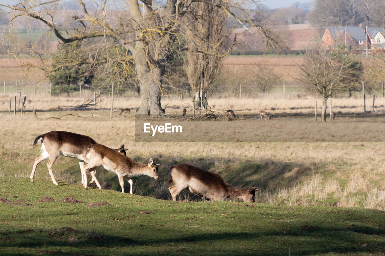 mammal, animal, animal themes, animal wildlife, group of animals, animals in the wild, tree, plant, grass, land, nature, no people, domestic animals, field, full length, day, environment, landscape, vertebrate, two animals, outdoors, herd, herbivorous