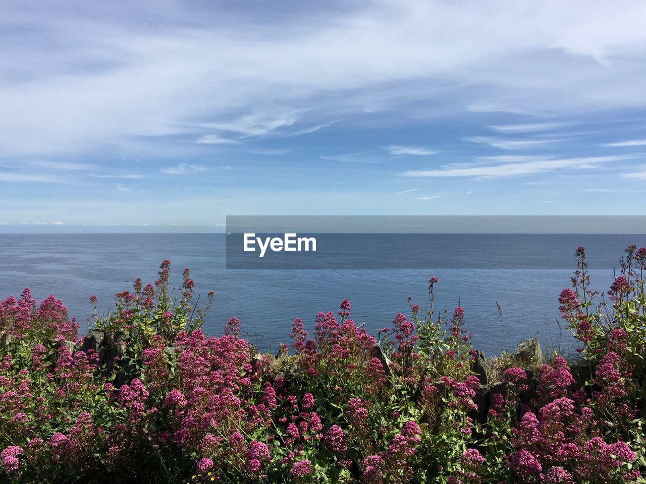 beauty in nature, sea, water, sky, plant, flower, scenics - nature, horizon over water, horizon, flowering plant, growth, tranquil scene, nature, cloud - sky, tranquility, day, no people, land, idyllic, outdoors