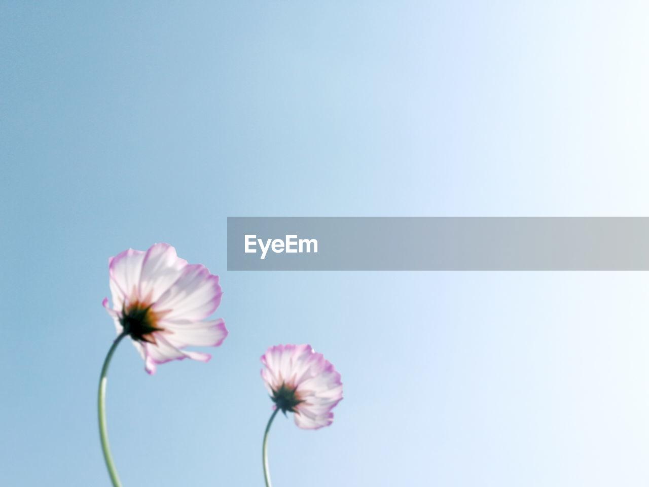 Close-Up Of Pink Flower Against Blue Sky