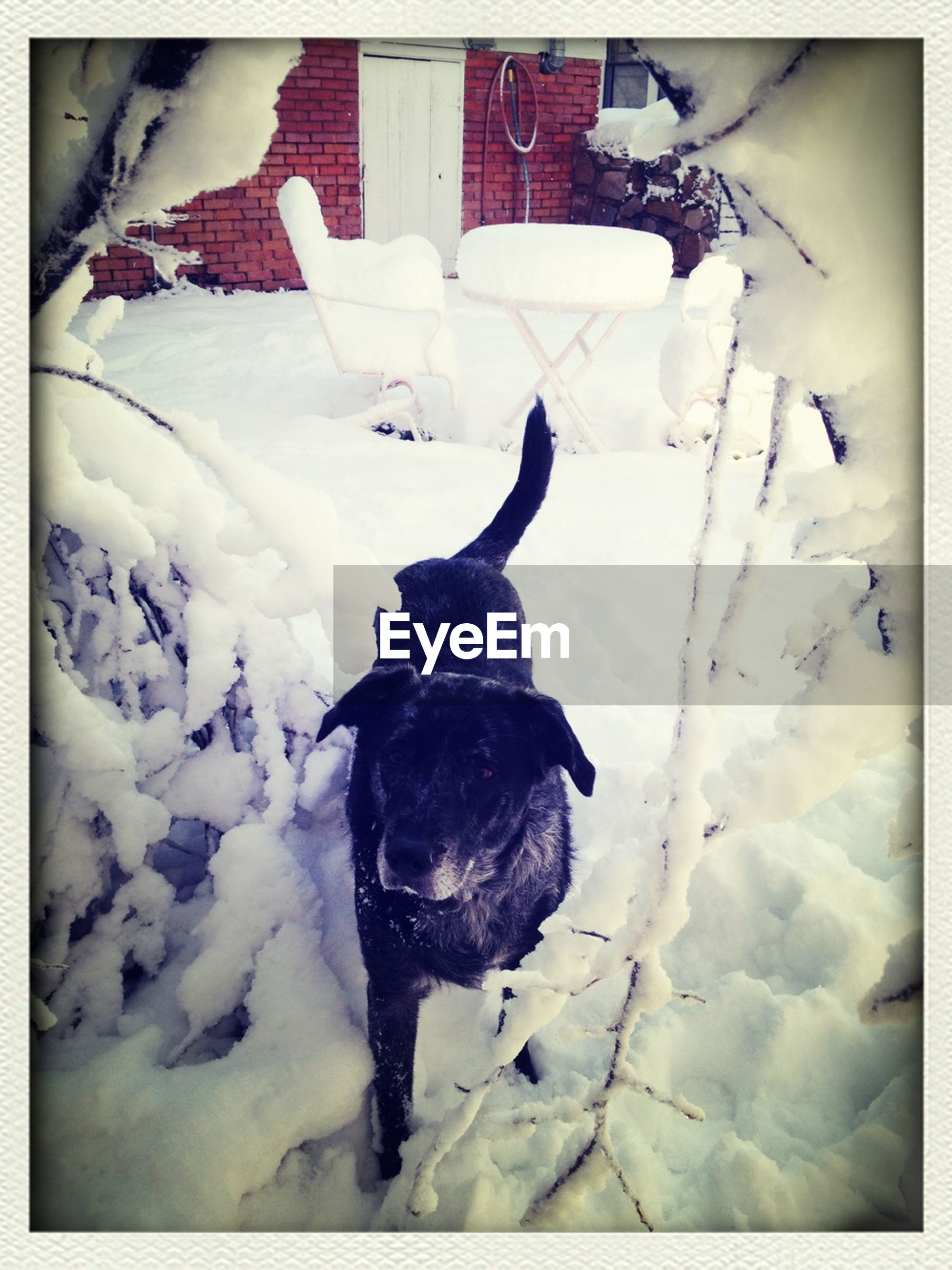 transfer print, pets, snow, domestic animals, animal themes, cold temperature, dog, winter, one animal, auto post production filter, mammal, season, white color, weather, covering, full length, high angle view, black color, frozen, day