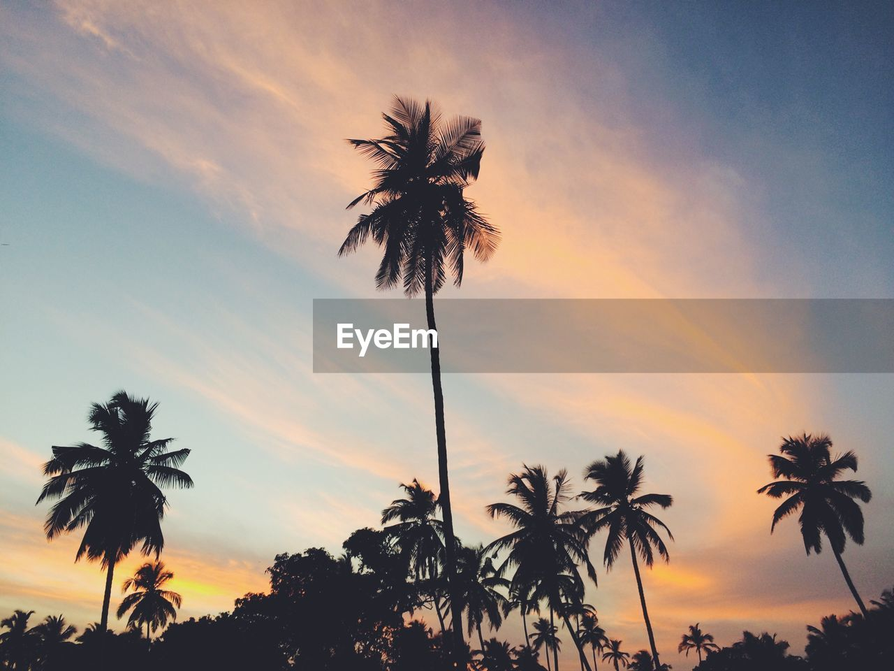 palm tree, tree, sunset, silhouette, tree trunk, beauty in nature, sky, scenics, tranquility, nature, growth, palm frond, tranquil scene, low angle view, tropical climate, sun, cloud - sky, beach, no people, outdoors, day