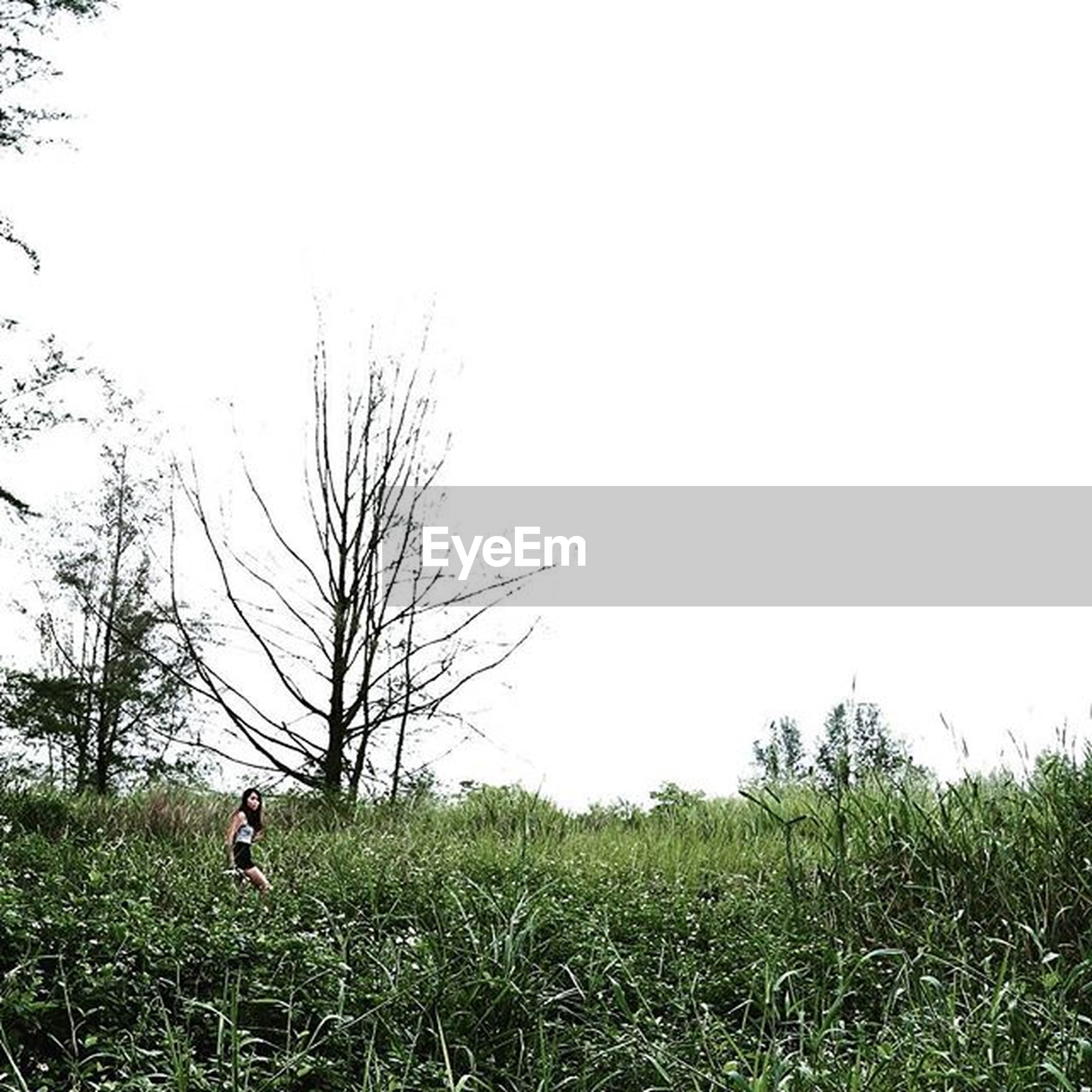grass, lifestyles, leisure activity, full length, men, field, clear sky, tree, tranquility, grassy, nature, tranquil scene, copy space, landscape, standing, rear view, beauty in nature, person